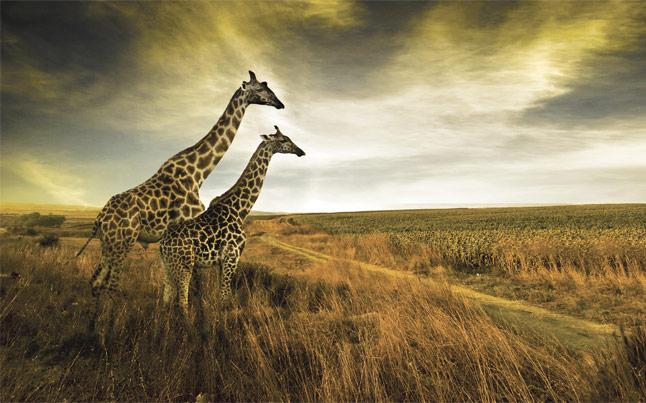 Extreme Scene Safari