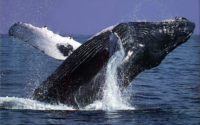 Extreme Scene Whale Watching