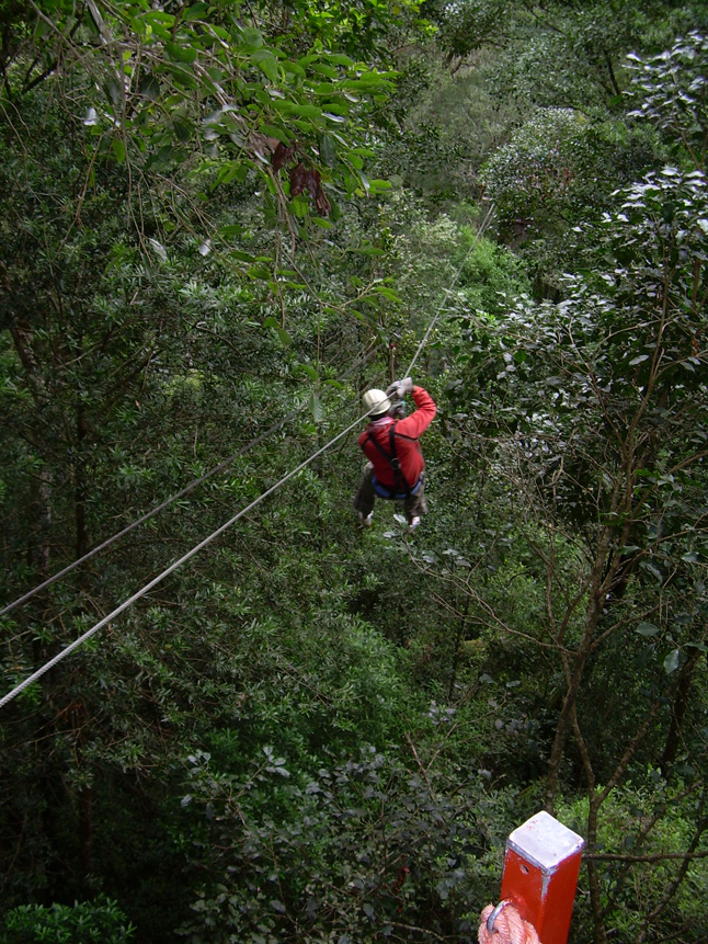 Tree Top Canopy Tours Extremescene